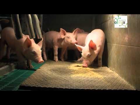 ECOPIGLET : Olmix's response to piglet's digestive disorders